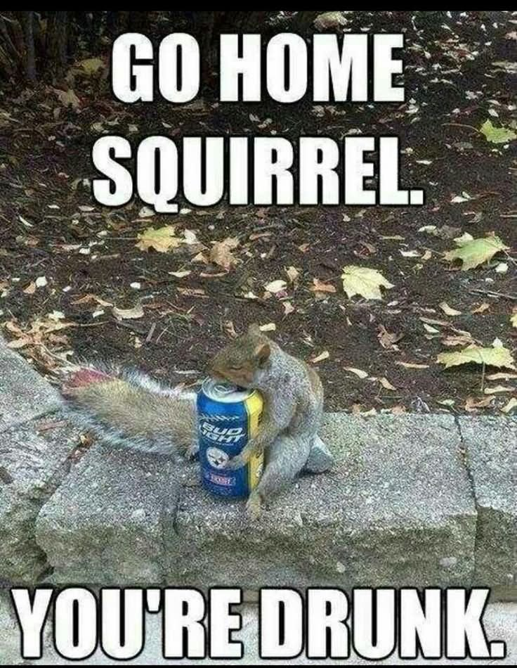 39 Very Funny Squirrel Meme Images, Gifs & Pictures | Picsmine