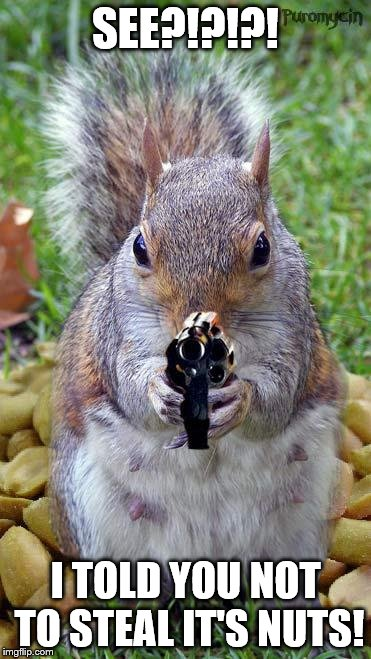 Squirrel Memes See i told you not to steal it's nuts