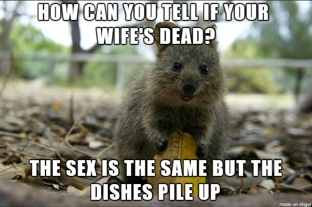 Squirrel Memes how can you tell if your wife's dead the sex