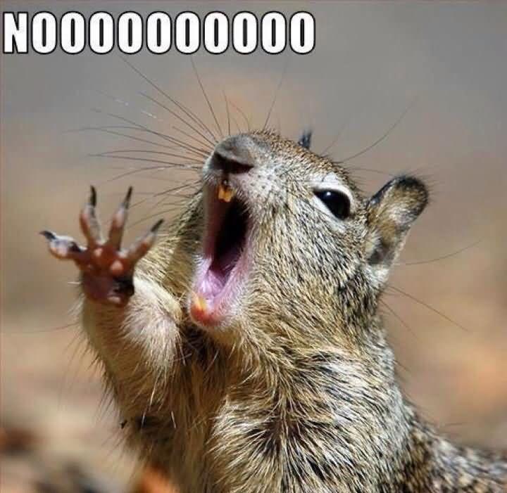 Squirrel Memes nooooooooo