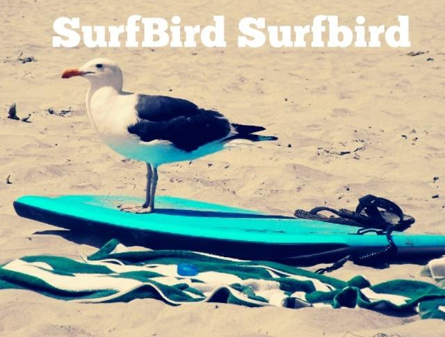 Surfing Meme Surfbird
