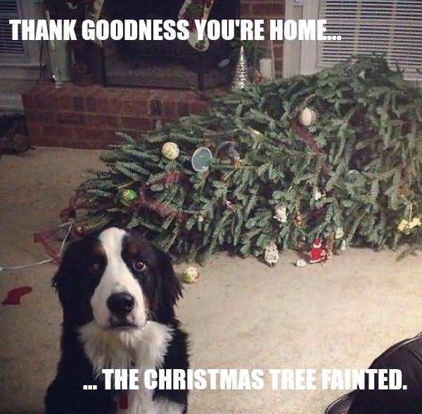 Thank goodness you're home the chritmas tree fainted Tree Memes