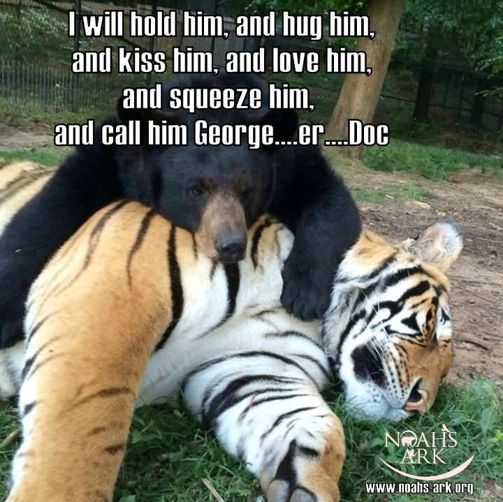 Tiger Meme I will hold him and hug him and