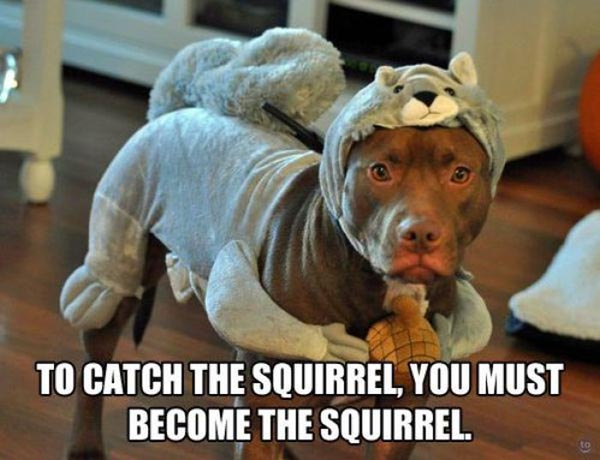 To catch the squirrel you must become Pet Meme
