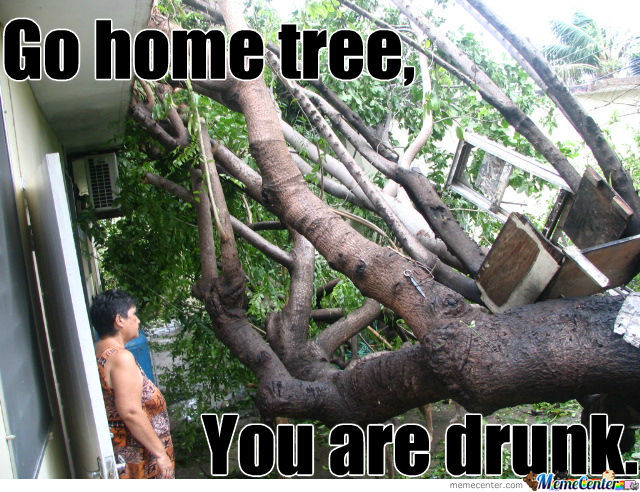 Tree Memes Go home tree you are drunk