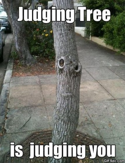 Tree Memes Judging tree is judging you
