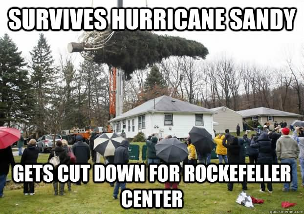Tree Memes Survives hurricane sandy gets cut