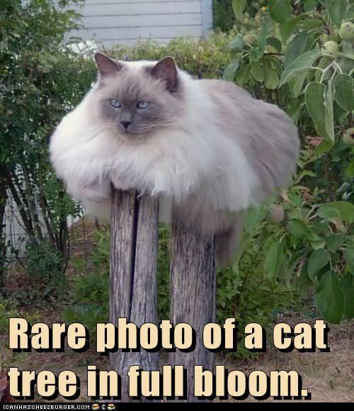 Tree Memes rare photo of a cat tree in full bloom