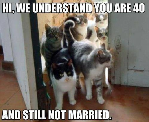 Wedding Meme Hi we understand you are 40 and still not married