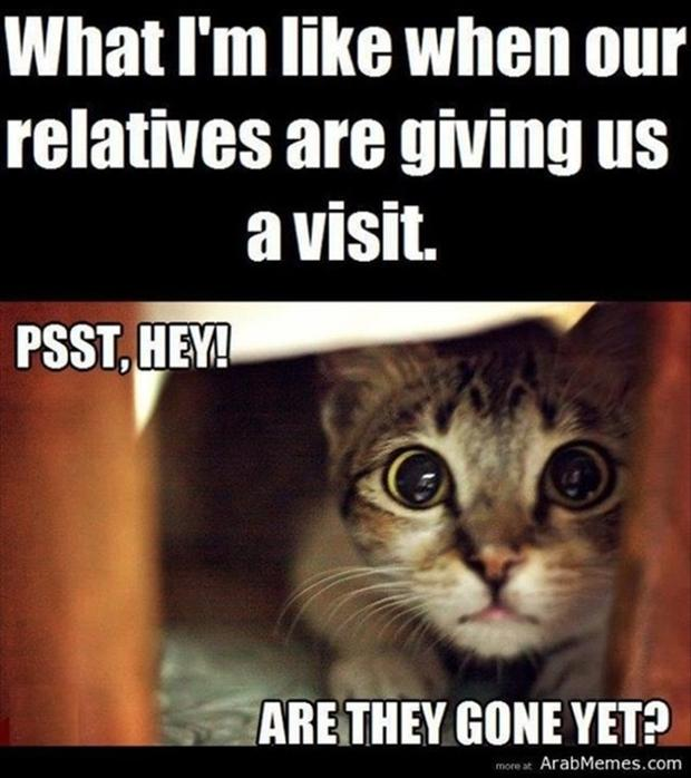 What I'm like when our relatives are giving us a visit Pet Meme