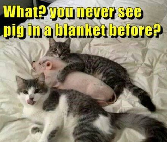 What you never see pig in a blanket before Pigs Meme