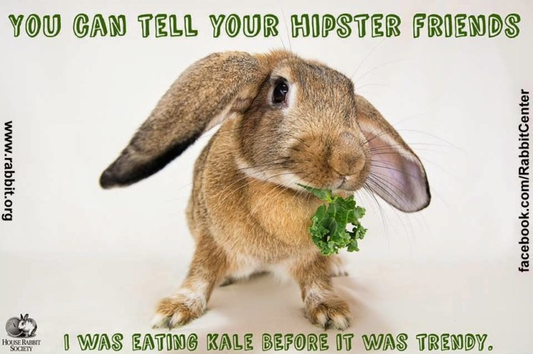 You can tell your hipster friends Rabbit Meme