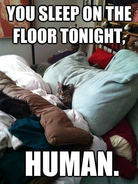 You sleep on the floor tonight human Sleeping Meme