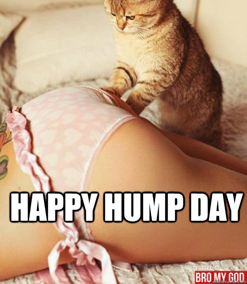 Happy hump day Hump Day Meme Dirty
