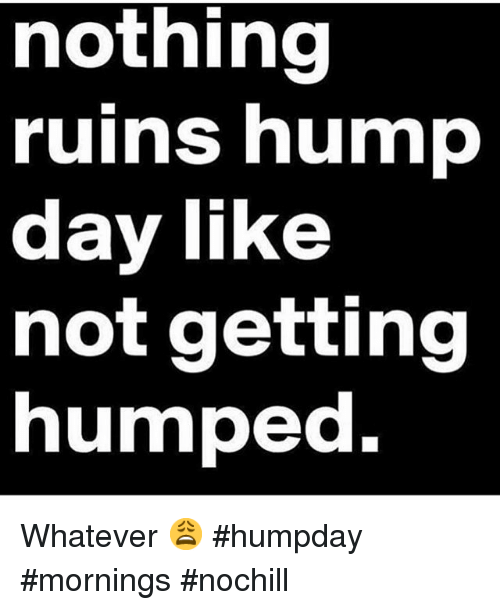 Hump Day Meme Nothing ruins hump day like not getting humped