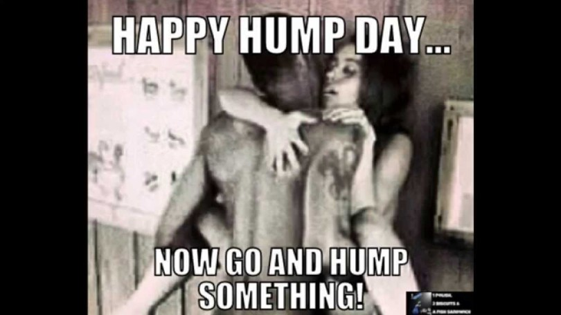 Hump Day Meme happy hump day now go and