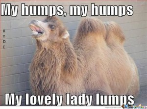My humps my humps my lovely lady lumps Hump Day Meme