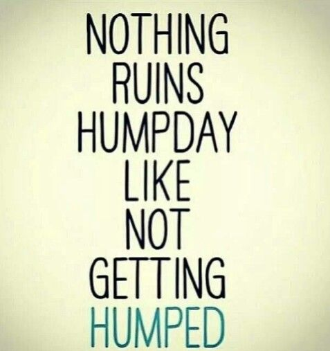Nothing ruins humpday like not getting humped Hump Day Meme Dirty