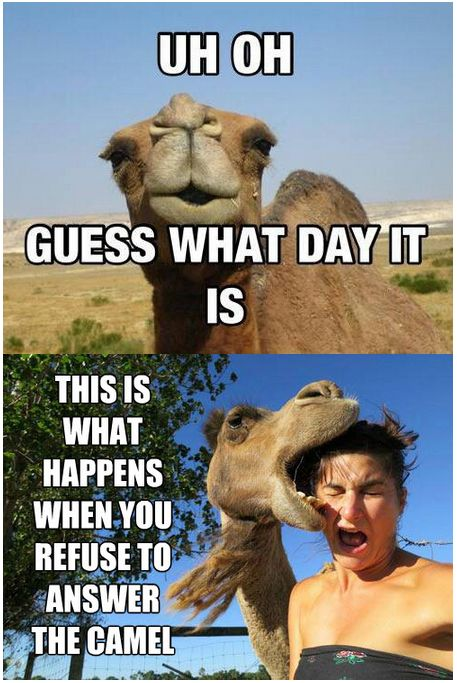 UH oh guess what day it is this is what happens Wednesday Work Meme