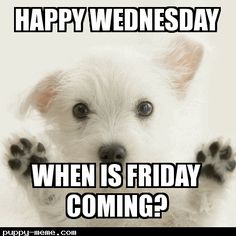 Wednesday Meme Happy Wednesday when is Friday coming