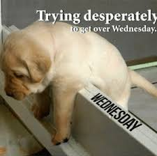 Wednesday Memes Trying desperately to get over