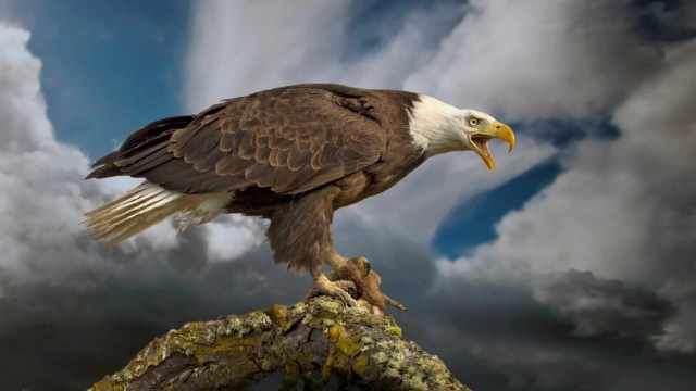 American Eagle Day June 20th Wallpaper