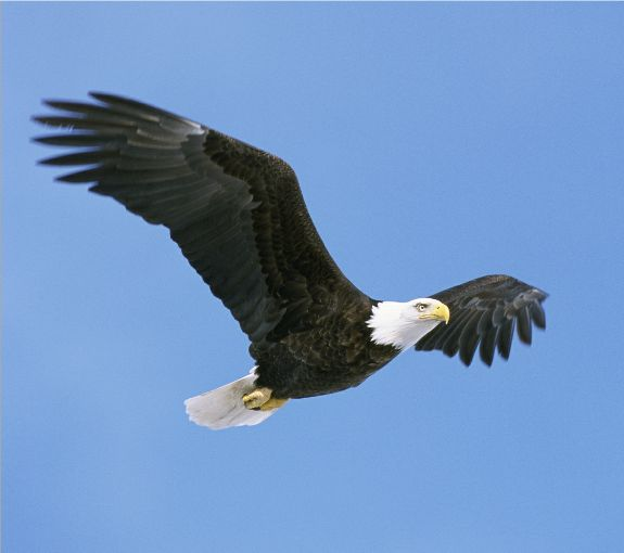 Best Wishes Happy National American Eagle Day Greetings Images