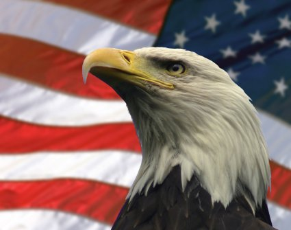 Wish You Happy National American Eagle Day Wishes Message Image