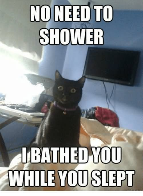 No Need To Shower I Bathed You While You Slept Grumpy Cat Memes