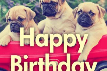 Animal Birthday Greetings Card 14