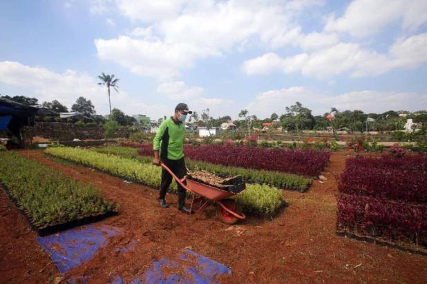 FOTO: Kebun Bibit Casamora untuk Menghiasi Jalur Hijau Jakarta