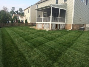 Magnolia Green Lawn Aeration Seeding Fertilization by Picture Perfect Lawn Maintenance (804) 530-2540