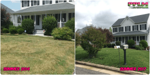 Broadmoor Park Lawn Care Aeration Seeding Fertilization | Picture Perfect Lawn Maintenance | (804) 530-2540