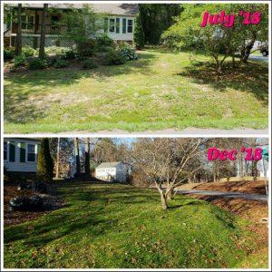 Spring Weed Control | Fertilization | PPLM | (804) 530-2540
