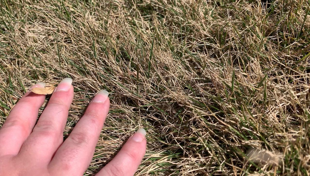 Warm Season vs Cool Season Grass