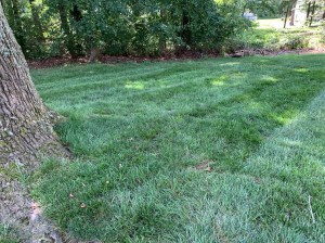 How often should I overseed my lawn