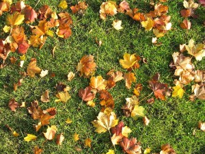 mulching leaves bad for grass
