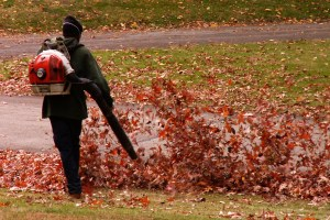 Blowing Leaves