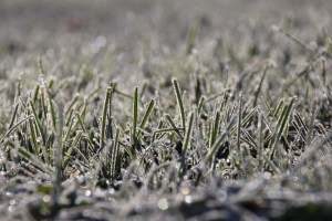 What happens to grass in the winter