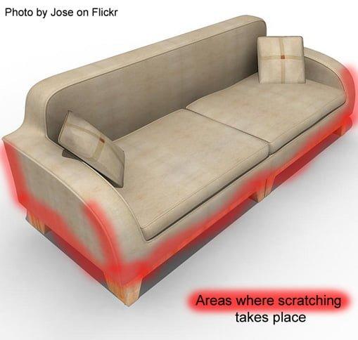 Marvelous How To Prevent Cat Scratching Sofa Conceptstructuresllc Com