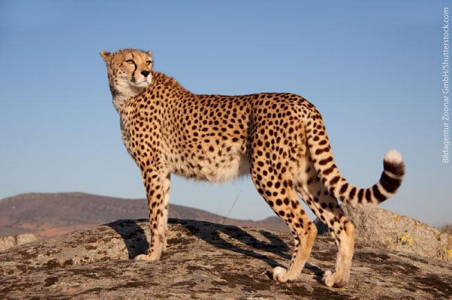 1st Fastest Animal World