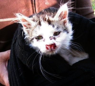 Kitten Survives 3 Story Fall Inside Microwave