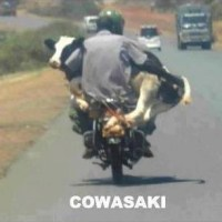 Cowasaki - The Bike for Cows