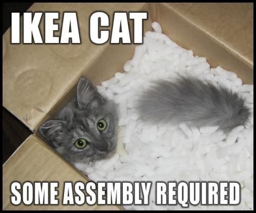 081227-ikea-cat-assembly.jpg