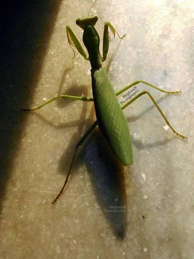 Mantis I