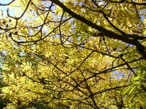 leaves citrine
