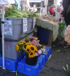 farmers market sunflowers and corn