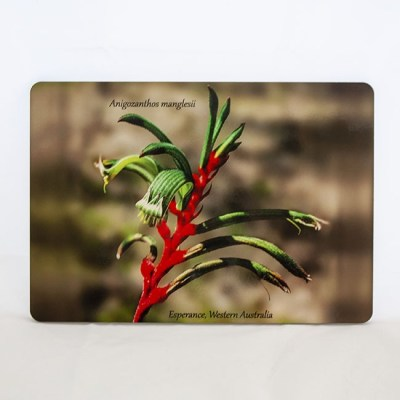 flower of a kangaroo paw on a placemat