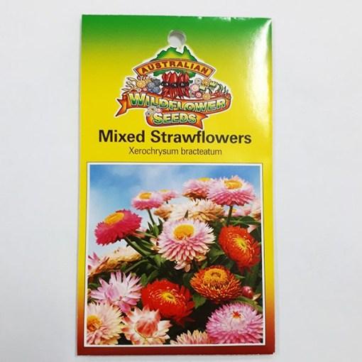 Strawflower seeds