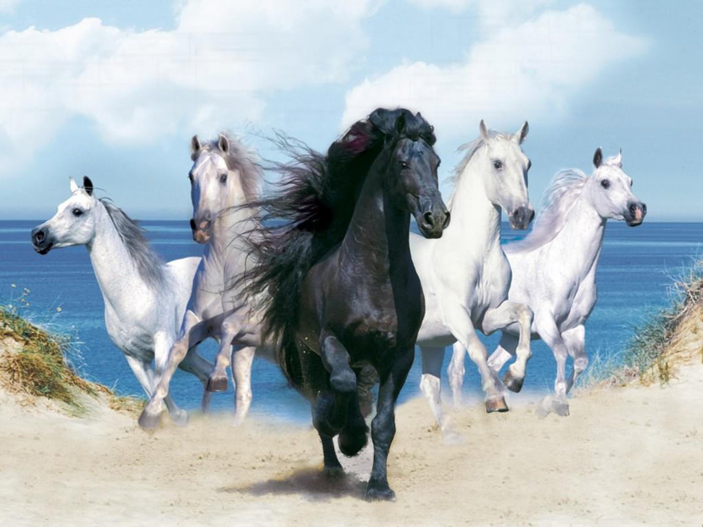 صور خيول اصيلة صور اجمل الخيول الاصيلة عيون الرومانسية